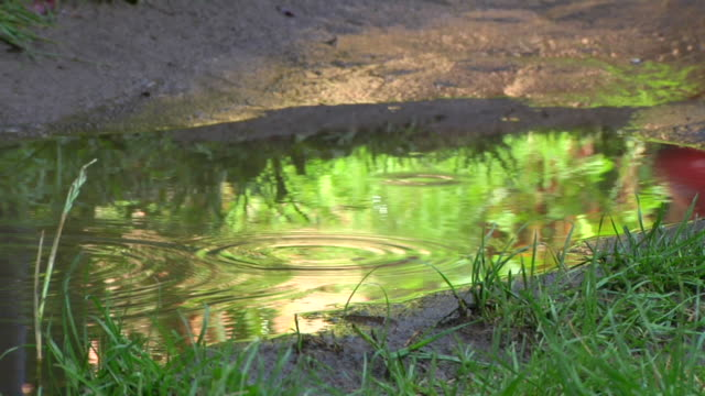 SLOW MOTION: Splashing in a Puddle video