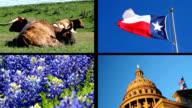 Split screen video Lone Star State Texas video