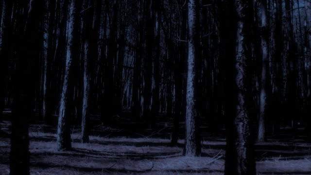 Spooky dark woods video