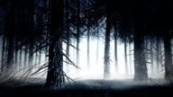 Spooky forest video