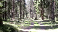 Sportsman Running in the Forest by the Road video
