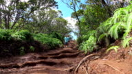 LOW ANGLE: Sporty couple hiking on dirt forest road leading through lush jungle video