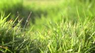 Spray On Grass Field Slow VI video