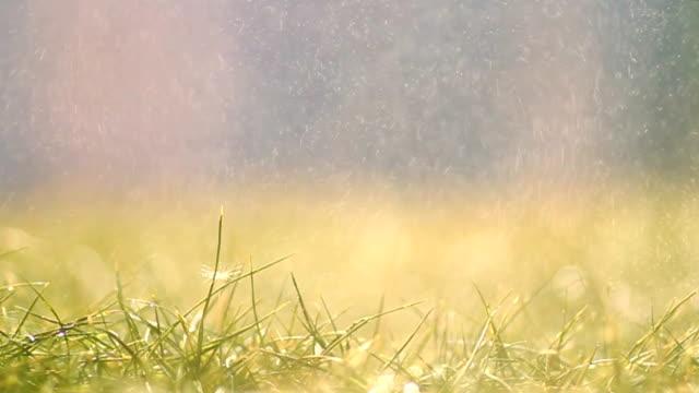 Spray on grass video