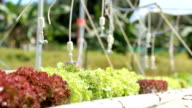 spraying hydroponics vegetable video