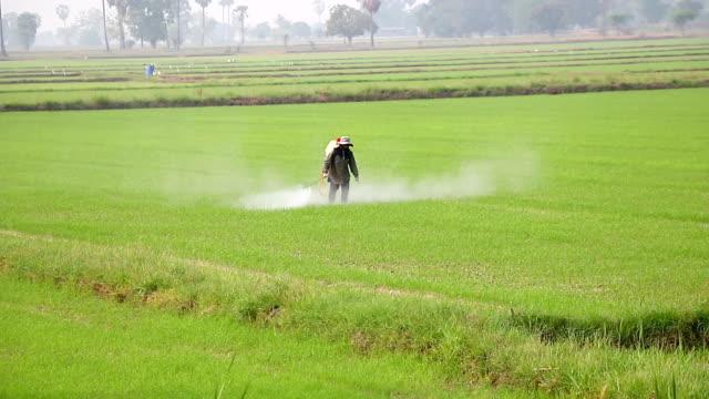 Spraying in rice field video