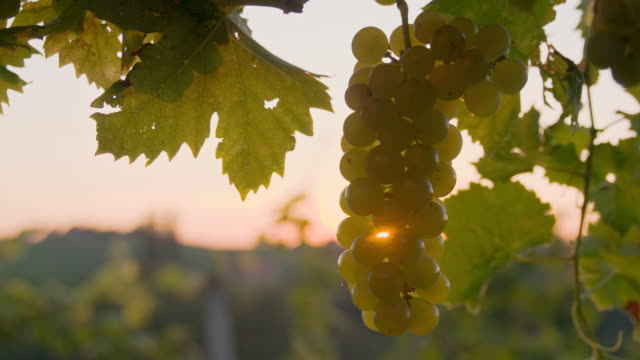 SLO MO Spraying The Grapes video