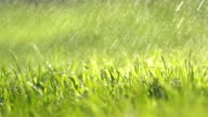 HD SUPER SLOW MO: Spraying The Grass video
