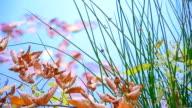 sprig of wilted leaves video