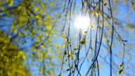 spring background, bright spring sunny day with a blue sky video