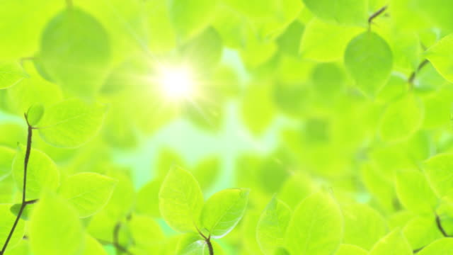 Spring background, natural frame of beautiful green leaves video