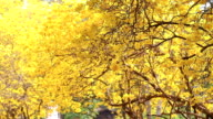 Spring background with beautiful yellow flowers video