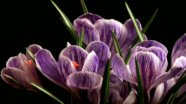 Spring Beautiful Flower Time Lapse video