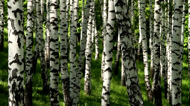 spring birch grove video