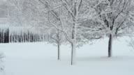Spring Blizzard video