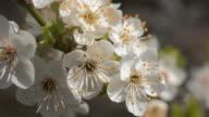 Spring bloom video