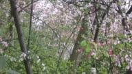 Spring blossem video