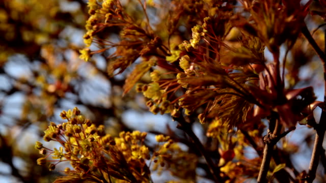 Spring blossom video