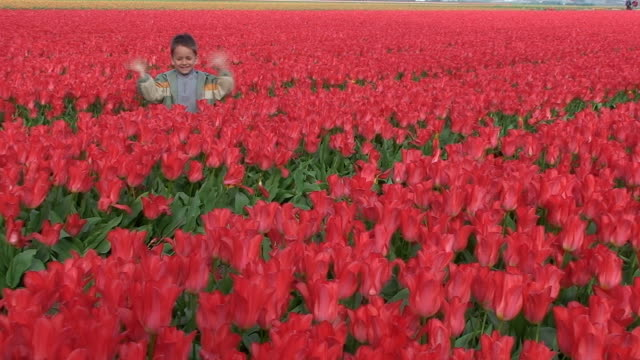 Spring. Boy in tulips. video