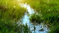 spring brook video