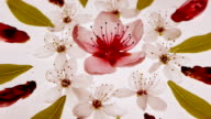 Spring floral kaleidoscopic pattern with cherry & apricot flowers and leaves. video