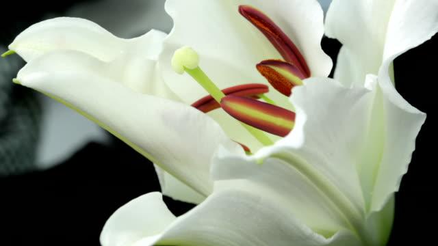 Spring Flower Blooming video