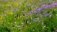 spring flower meadows in mountains in many colours video