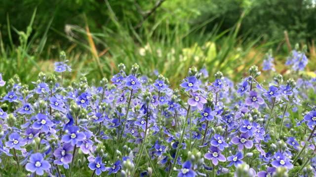 Spring flowering video