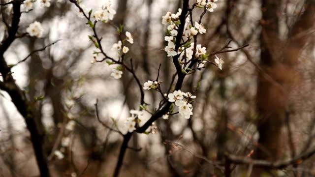 Spring flowers video