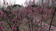 Spring Garden video