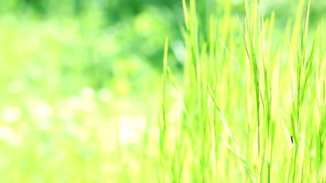 Spring grass video