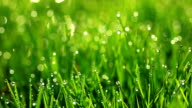 spring grass with dewdrops video