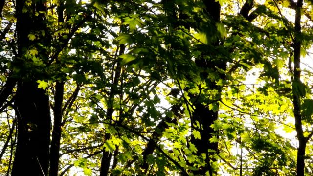 Spring green leaves. video