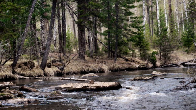 Spring idealistic landscape mountain river at the forest video
