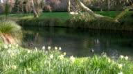 Spring in Hagley Park, Christchurch NZ video
