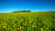 CRANE UP: Spring Meadow video