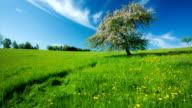 STEADYCAM: Spring Meadow video