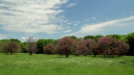 Spring Meadow with Pink Trees video