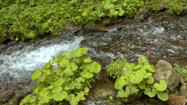 Spring mountain stream video