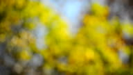Spring or summer abstract season nature background. video