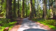 Spring Redwood Forest video