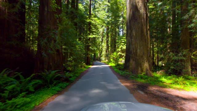Spring Redwood Forest video