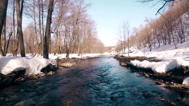 Spring stream in the forest. Change of seasons and beginning of spring. video