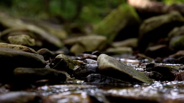 Spring Stream video