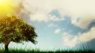 Spring / Summer tree video
