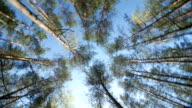 Spring Sun Shining Through Canopy Of Tall Trees video