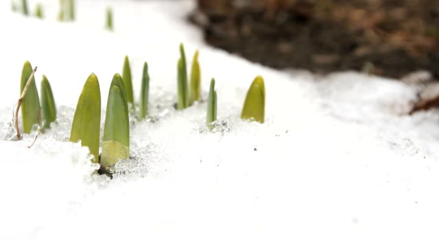 Spring Thaw Time Lapse video