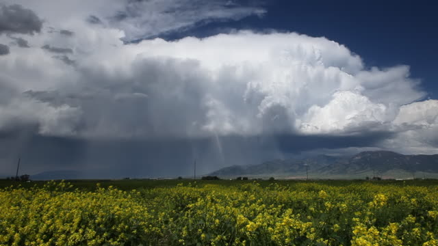 Spring thunder storm and wild yellow flower country landscape video