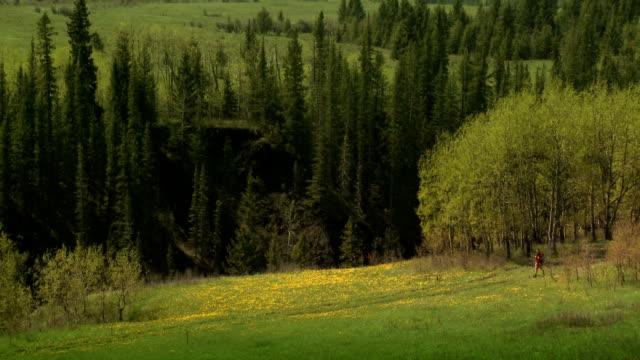Spring Time Solitude video