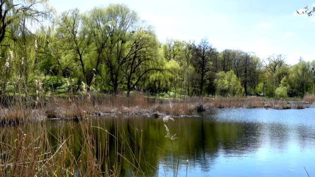 Spring Uninhabited Landscape With a Lake video